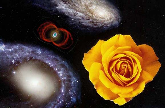 blog-galaxies-rose.jpg