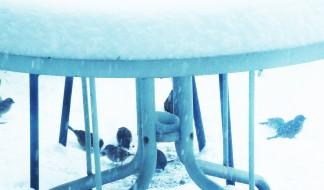 blizzard-bacchanal