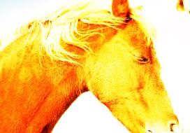 horse-and-sugar