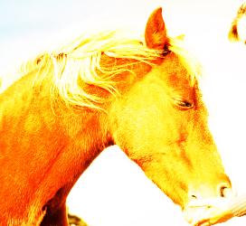 horse and sugar