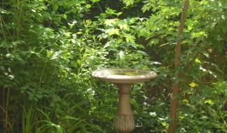 back-garden-bath