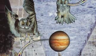 owls-for-blog